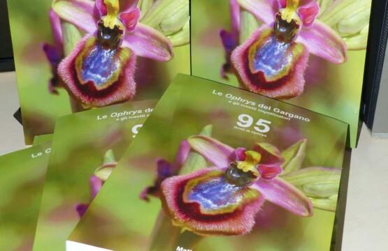 """""""Le Ophrys del Gargano"""", di Matteo Perilli"""
