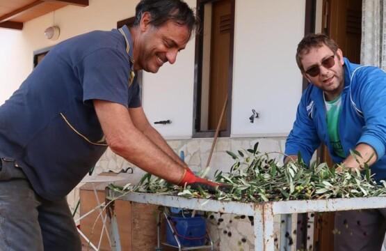 """""""Die Welt"""", dedica un articolo alla raccolta delle olive a Mattinata (Foto: www.welt.de)"""