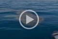 Uno squalo enorme si avvicina alla barca di un pescatore